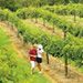 Sunshine Coast Winery Tour including Wine Tasting