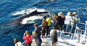 3 Hour Whale Watching Cruise