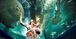 UnderWater World Admission