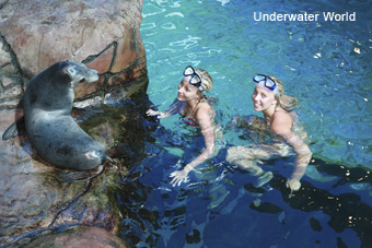 Underwater World, Mooloolaba